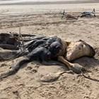 Чудовището на плажа в Ливърпул Снимки:  Ainsdale Facebook Group