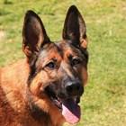 Полицейско куче надуши четвърт милион евро за няколко дни в багажа на пътници на летището във Франкфурт СНИМКА: Pixabay