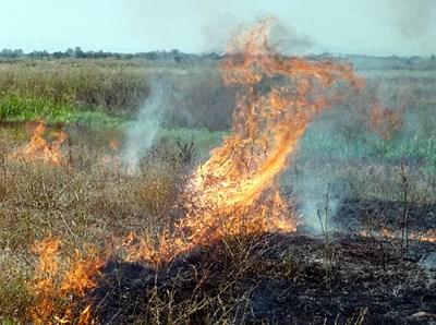 Всяка година запалените стърнища са обичайна гледка.