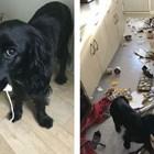 Дори и опустошената от нея кухня Снимки: Caters News Agency