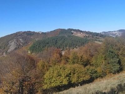 Планински спасители, полицията и армията търсят изчезналия човек в Родопите
