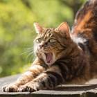 Защо котката ни събужда точно минута преди будилника?