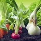 Сеитбообращенията в зеленчукопроизводството