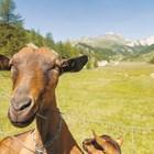 Швейцарска долина е на път да стане 100% биологична