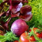 Лукът е №1 сред храните, богати на кверцетин