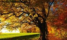 Тазгодишният октомври е най-топлият, регистриран някога