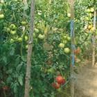 Подхранвайте растенията, за да имате богата реколта