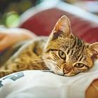 Котката ви мисли за свой родител