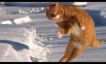 Сняг и котки