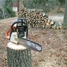 Служителите опитали да спрат незаконно извозване на дървесина. Снимка Архив
