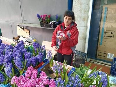 Кически зюмбюли в саксии са сред най-търсените цветя за 8 март