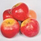 Ябълки, устойчиви на струпясване