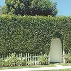 12 идеи за жива ограда