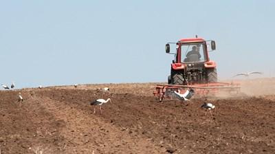 На декларираните за субсидии ниви трябва да са извършени нужните агротехнически обработки.