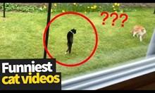 Клипове с котки които превзеха интернет