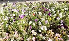 Крадат цветя от обществените градинки в Каварна