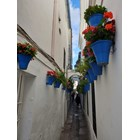 Най-тясната уличка в стария град също е цялата в цветя.