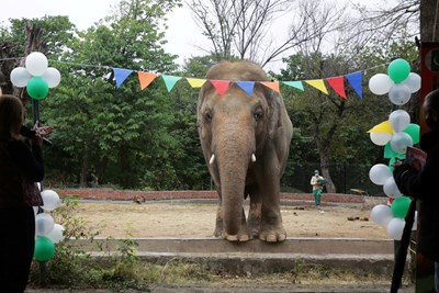"""""""Най-самотния слон в света"""" Кааван в Пакистан СНИМКА: РОЙТЕРС"""