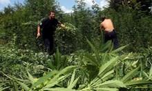 Село Лазарат - люлката на марихуаната