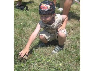 1. Костенурките с антени бяха атракция за деца и възрастни.