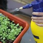 ВАП нареди проверка за неразрешени препарати за растителна защита