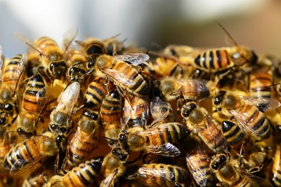 Половин милиард пчели са умрели за 3 месеца в Бразилия
