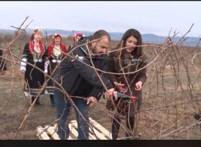 Посланик Мустафа заряза лозята: Нека е берекет (Видео)