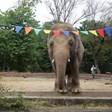 """Шер е в Пакистан за среща с """"най-самотния слон в света"""""""