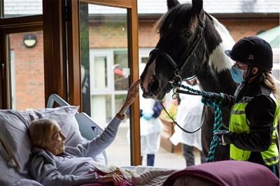 Ян се сбогува с коня си Снимки: Hospice of the Good Shepherd