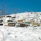 Студът не застрашава живота на пчелното семейство