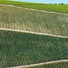 Страните от ЕС предприеха различни действия против  продажбата на земеделска земя на чужденци. Например унгарският премиер Виктор Орбан предотврати продажбата на земеделска земя на чужденци с промяна на Конституцията. Снимка Shutterstock