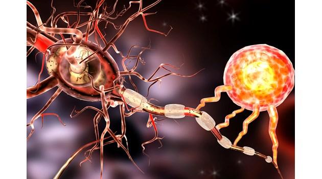 Глиални клетки побеждават множествената склероза