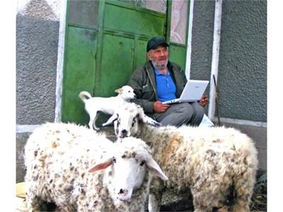 Овчиците, изглежда, нямат нищо против новото занимание на своя пастир. СНИМКА: АВТОРЪТ