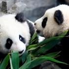 Германските зоопаркове поискаха помощ от 100 млн. евро за изхранването на животните СНИМКИ: Ройтерс