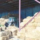 Не е за подценяване и фактът, че сламата не е евтин фураж и осигуряването й в някои райони може да е проблематично.