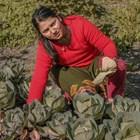 """Фонд """"Земеделие"""" преведе 42,4 млн. лева на биопроизводителите"""