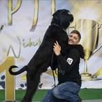Кучето на Владо Карамазовшампион и на Македония