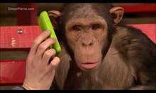 Фокусници забавляват маймуни