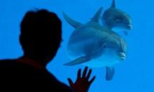 Варварската експлоатация на делфини
