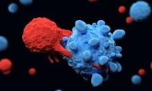 Ето кой плод убива 90% от раковите клетки
