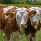 Проектът има за цел да контролира допълнителни здравни характеристики на 80 000 говеда и да ги оцени заедно с генетичния им профил и генетичния маркер.