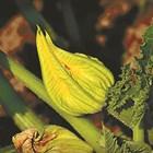 Зеленчуците се нуждаят от основните 3 макроелемента