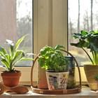 Поне по 3 растениявъв всяка стая
