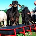 Животновъдите получават първите си субсидии от новата кампания