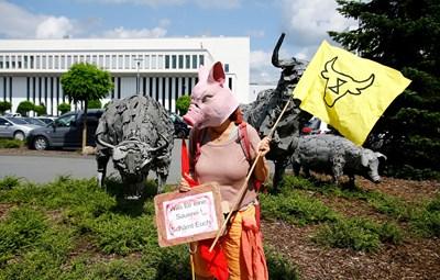 """Активист с маска на прасе протестира пред кланицата """"Тьонес"""", която беше затворена заради взрив на заразени."""