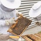 Задължителен преглед на пчелните майки
