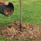 Защитете корените на младите дръвчета