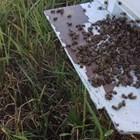Лятото на 2019 г. беше най-трудното в живота на руските пчелари. Масовата смърт на пчелите, която започва през юни и до късна есен не бе приключила, поставя под въпрос съществуването на частно пчеларство в страната