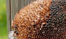 Задигнали тон слънчогледово семе на земеделец в Монтанско