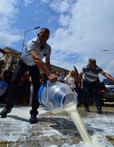 Последните протести на млекопроизводители срещу ниските изкупни цени на млякото бяха през 2018 г. Оттогава цената му е приемлива за производителите, но твърде висока за млекопреработвателите и това ги изкушава да мислят начини как да спестят част от тези разходи.  СНИМКА: ЙОРДАН СИМЕОНОВ